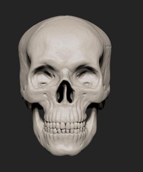 Skull_front