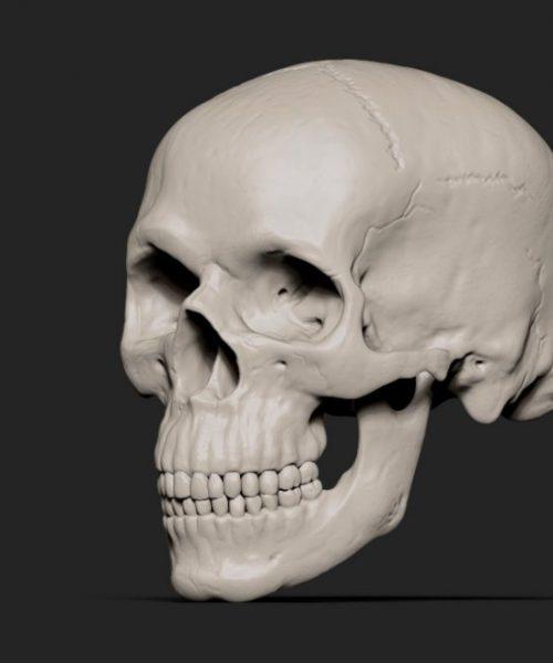 Skull_half_side