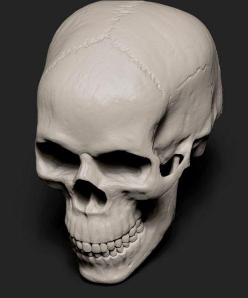 Skull_half_side_up