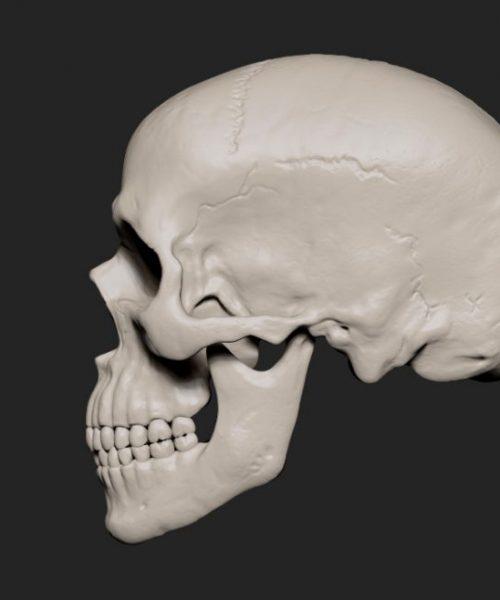 Skull_side